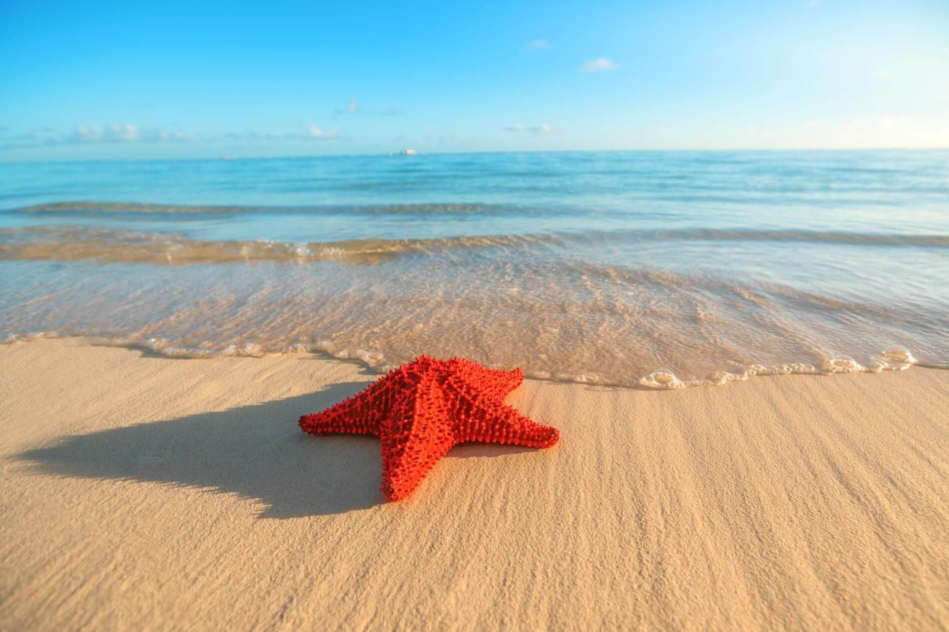 חופים אקזוטיים